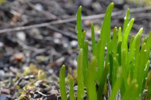 Week 14, Texture Grass, Gabriella Smith, age 18