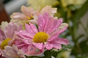 Week 14, Patterns Flower Gabriella Smith, age 19