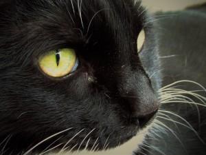Cat, Amy, age 15