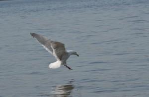 Lesson 22, Edit (After) Seagull, Gabriella