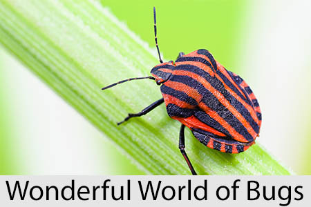 wonderfulworldofbugs