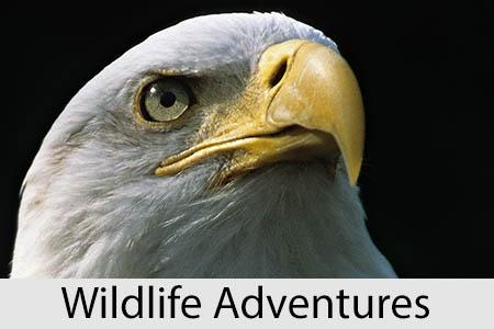 wildlifeadventures