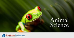 Animal Science Homeschool Course