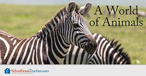 A World of Animals Homeschool Science