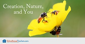 Creation, Nature, and You Homeschool Science