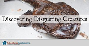 Disgusting Creatures