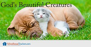 God's Beautiful Creatures Homeschool Science
