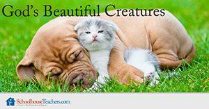 God's Beautiful Creatures Homeschool Science