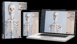 Red Wagon Human Body for High School