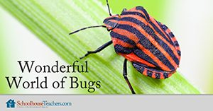 Wonderful World of Bugs Homeschool Science