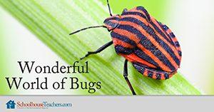 Wonderful World of Bugs Homeschool Science